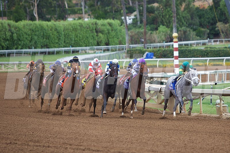 Judy the Beauty (black cap) came from behind while rounding the turn to win the Breeders' Cup Filly & Mare Sprint (gr. I).