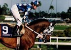 Champion Alysheba