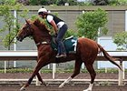 Criterion gallops April 23 in preparation for the QEII Cup.