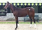 Keeneland November 2014 Sale: Hip 402