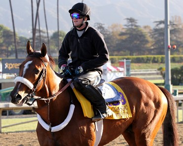 Mucho Macho Man on the track at Santa Anita Park on October 29, 2013. Photo By: Chad B. Harmon