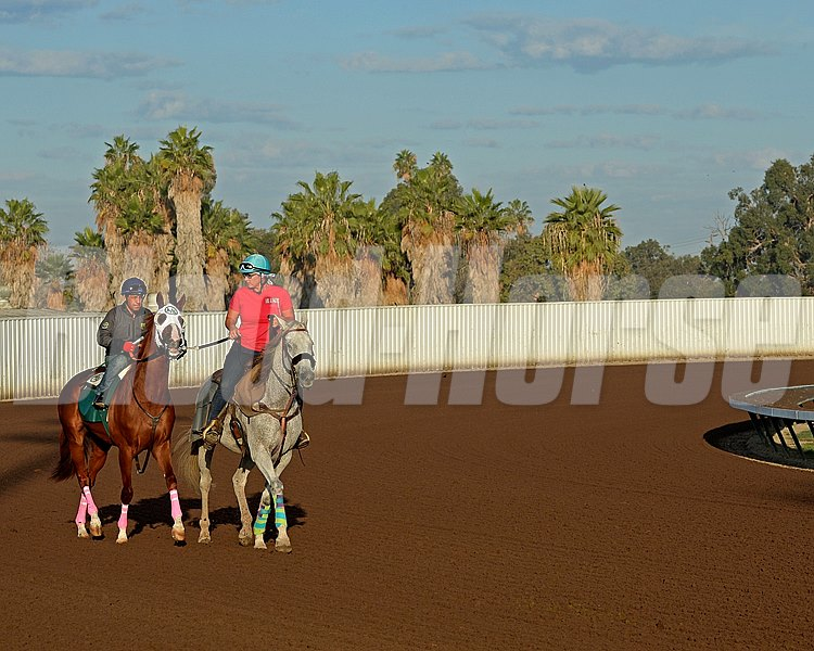 California Chrome with Victor Espinoza prepares to work at Los Alamitos Racetrack in California on Oct. 25, 2014. image 5059