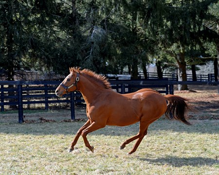 Thunder Gulch, age 23, at Ashford Stud near Versailles, Ky., on Feb. 4, 2015.