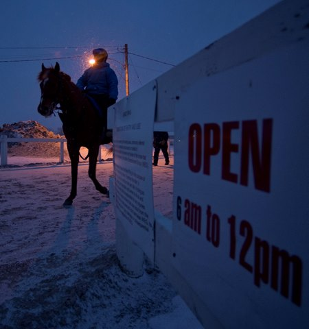 Thoroughbred's return to winter training at Woodbine Racetrack before sunrise in Toronto, Ontario Feb. 24, 2014.