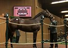 $2.5 Million War Front Colt New Sale Topper