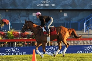 Checking out the Woodbine turf.