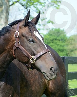 Zenyatta at Lanes End Farm - Spring 2011
