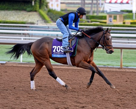 Souper Colossal on Oct. 26, 2014, at Santa Anita in preparation for the Breeders' Cup.