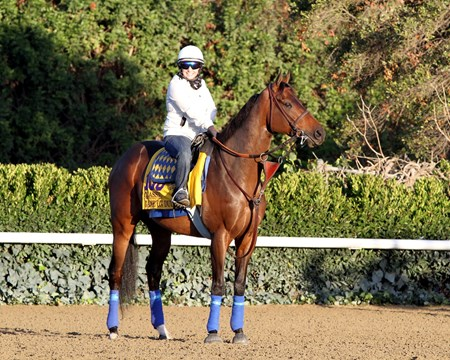 Game On Dude works out in preperation for the 2013 Breeders' Cup at Santa Anita Park.