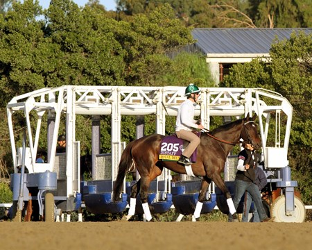 Royal Delta on the track at Santa Anita Park on October 29, 2013.