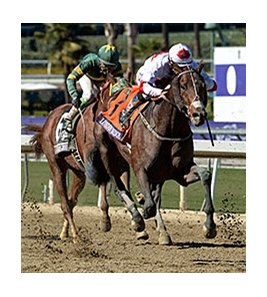 "London Bridge came on late to win the Marathon.<br><a target=""blank"" href=""http://photos.bloodhorse.com/BreedersCup/2013-Breeders-Cup/Marathon/33148158_pgQmsx#!i=2876231923&k=2RvW5ML"">Order This Photo</a>"