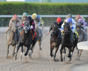His slate-gray tail streaming behind him, favored Cairo Prince set sail for home in the $400,000 Grade II Miller Lite Holy Bull Stakes at Gulfstream Park, solidifying his status as one of the main contenders to watch on the road to the Kentucky Derby.