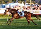 Black Caviar winning her 25th start in the T. J. Smith Stakes.