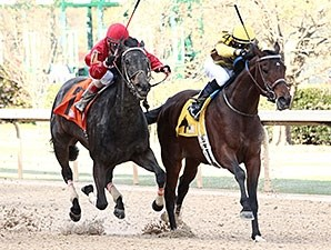 Trace Creek wins the 2015 Arkansas Breeders' Stakes.