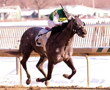 Gracer takes the Marshua Stakes at Laurel Park on January 4, 2014.