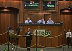 Hip 105, a yearling filly by The Factor, brought $190,000 to top the consignor preferred session of the Ocala Breeders' Sales Co.'s winter mixed sale.