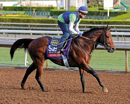 Secret Circle preps for the Breeders' Cup Sprint for Bob Baffert at Santa Anita.