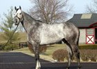 F-T Pinhooks Topped by Graydar Colts