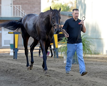 Caption:  Pants on Fire being hotwalked by Kelly Breen