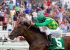 Grade 1 winner Finnegans Wake now stands at Rockingham Ranch