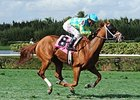 "Back Flip broke her maiden on turf in mid-November at Gulfstream Park West.<br><a target=""blank"" href=""http://photos.bloodhorse.com/AtTheRaces-1/At-the-Races-2014/i-QJnKKfz"">Order This Photo</a>"