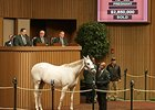 Modeling, hip 353, sold for $2.85 million Nov. 5 at the Keeneland November breeding stock sale.
