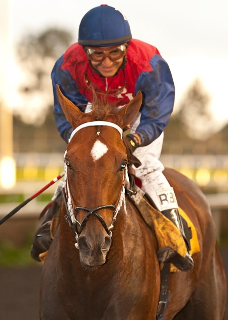 Jockey Rafael Bejarano guides Smiling Tiger to the winner's circle after their victory in the Grade III, $100,000 Vernon O Underwood Stakes, Sunday, December 2, 2012 at Betfair Hollywood Park, Inglewood CA.