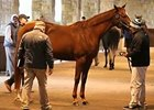 Keeneland January Sale Wrap: Day 4