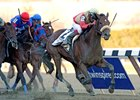 Wicked Strong winning the 2014 Wood Memorial