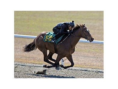 Hip No. 59, a Cowtown Cat filly out of the Saint Ballado mare Sea Saint, was one of those who worked an eighth of a mile in :09 4/5.