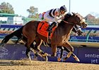 "Amazombie fights off a stubborn Force Freeze to win the Sprint.<br><a target=""blank"" href=""http://www.bloodhorse.com/horse-racing/photo-store?ref=http%3A%2F%2Fpictopia.com%2Fperl%2Fgal%3Fprovider_id%3D368%26ptp_photo_id%3D9729056%26ref%3Dstory"">Order This"