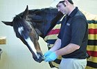 Rachel Alexandra at Rood & Riddle Equine Hospital.