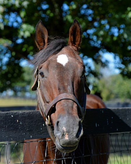 Lure in his paddock at Claiborne Farm near Paris, Ky., on Sept. 23, 2014. PensionersDarClai2 image226