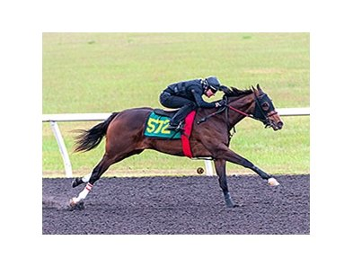 Hip 572, a filly by Any Given Saturday, breezed a quarter-mile in :20 4/5 April 15.