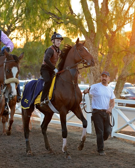 Caption:  Tonalist coming out of the paddock