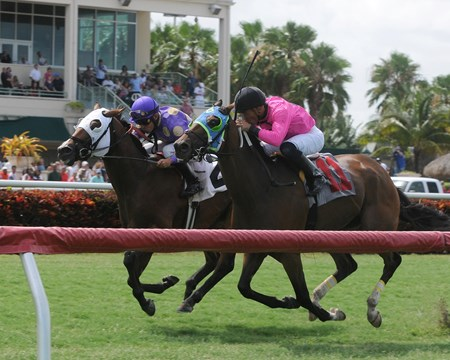 Alley Oop Oop and jockey Fernando Jara wins the Armed Forces Stakes at Gulfstream Park in Hallandale, FL.