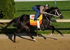 2009 Kentucky Derby Contenders
