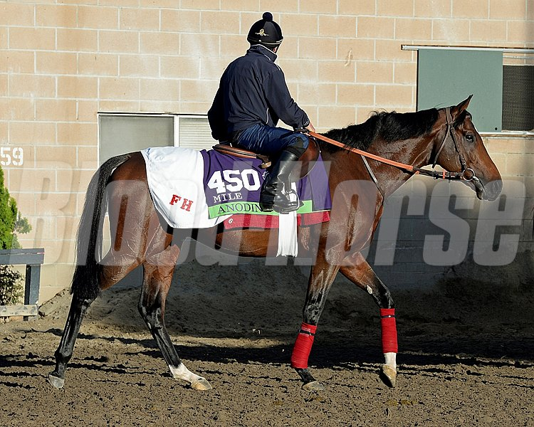 Caption:  Anodin trained by Fred Head.