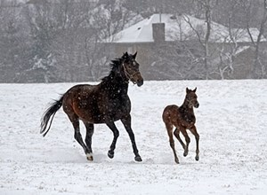Winter scenes at Golden Age Farm near Versailles, Ky. and other area farms.