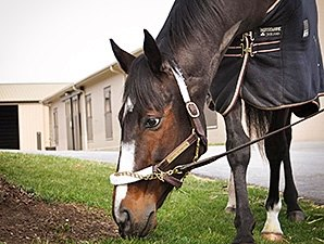 Rachel Alexandra Continues Recovery