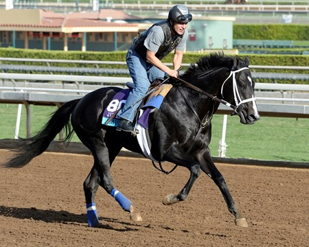 Caption:  IMperia