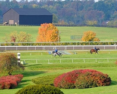 Breeders' Cup is coming and here are a few contenders exercising at Keeneland.