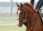 American Trainers Approve Meydan Move to Dirt