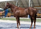 Hip No. 130, a chestnut colt by Scat Daddy -- Alittlebitearly, by Thunder Gulch brought $1.4 million.