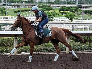 Red Cadeaux works at Shat Tin April 21, 2015.