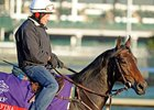 Sarafina jogs at Churchill Downs 11/1/2011.