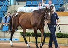 Australian group III winner One World, Lot 127, sold for the top price of Aust$720,000 ($746,721 in U.S. funds).