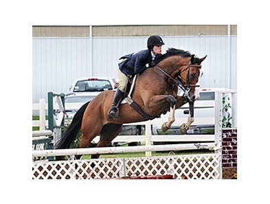 Kentucky Derby contender Sam P jumps at the New Vocations Charity Horse Show.