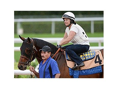 "Secret Circle has been training well in Dubai. <br><a target=""blank"" href=""http://photos.bloodhorse.com/AtTheRaces-1/At-the-Races-2015/i-sMjm6Xm"">Order This Photo</a>"