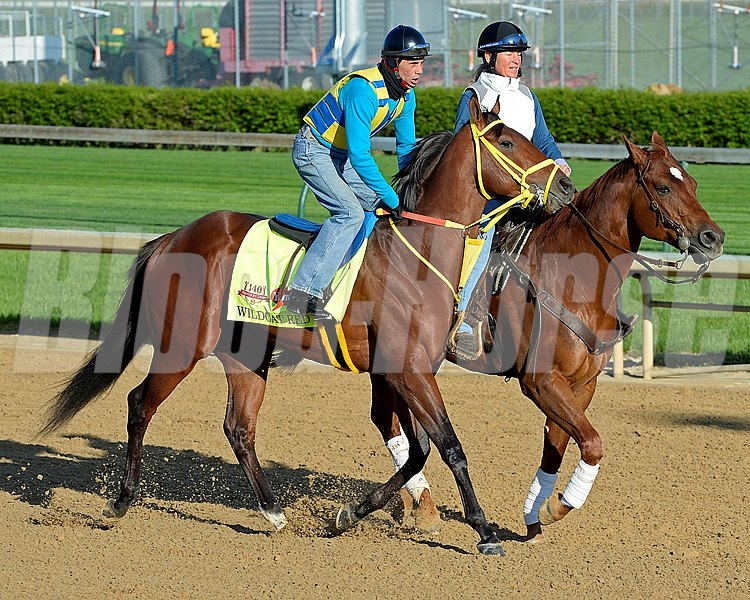 Caption: Wildcat Red